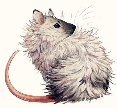 Rat Control