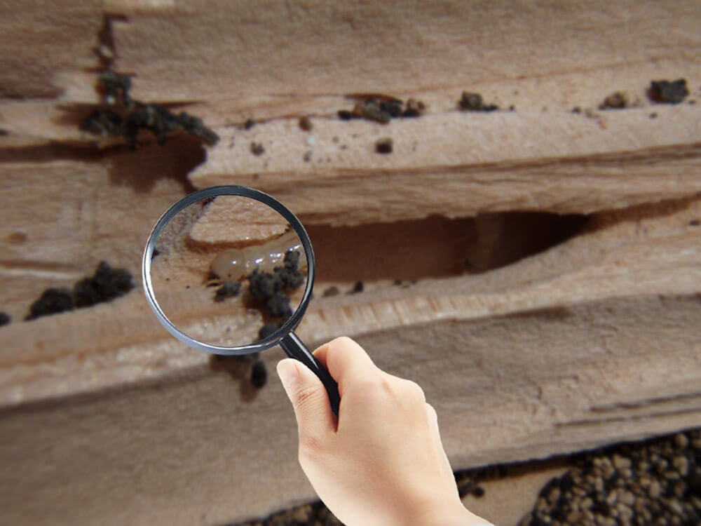 Free Termite Inspection