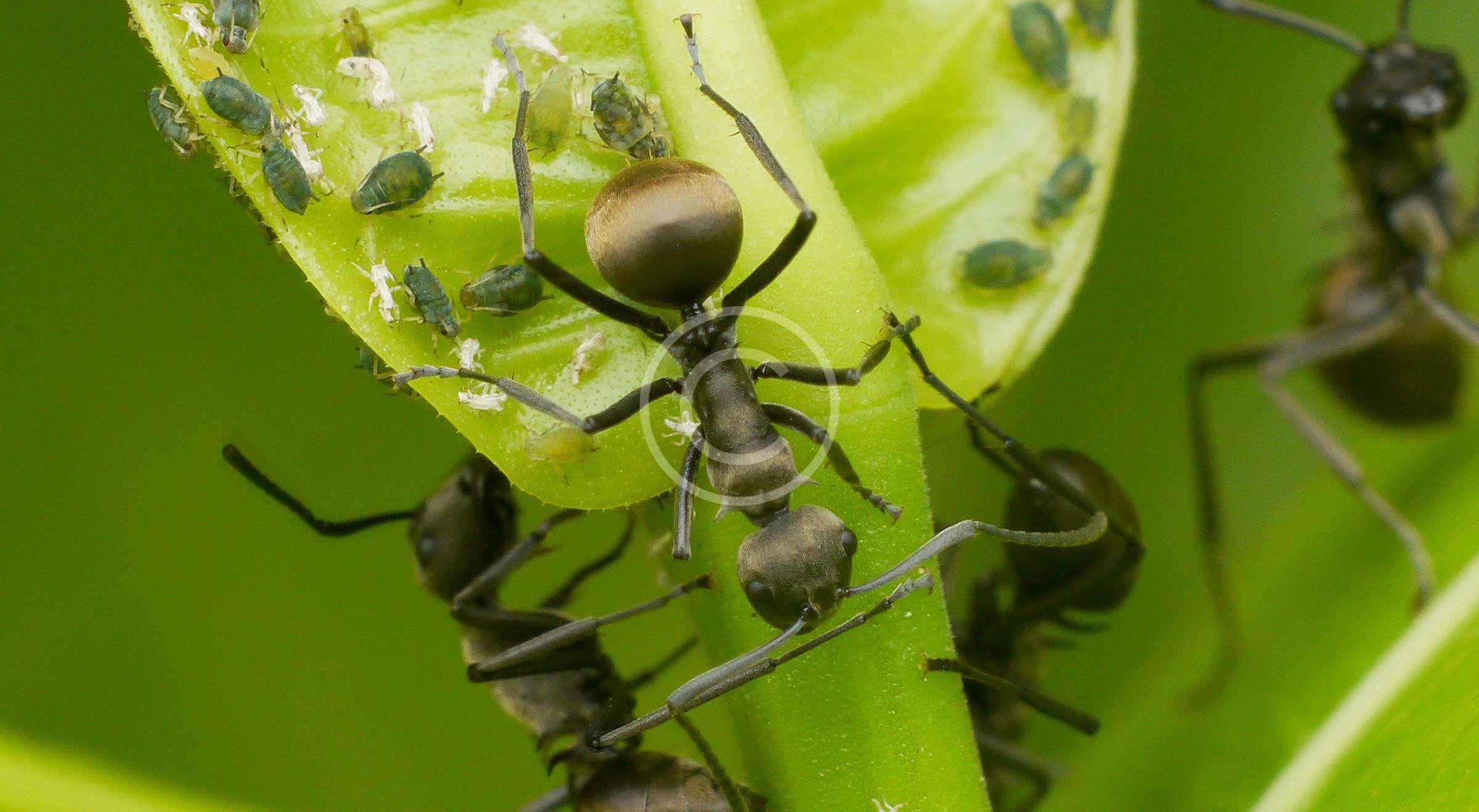 Ant Control Philippines